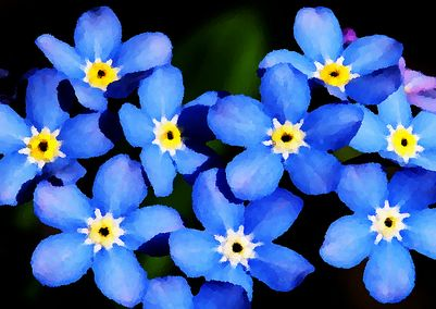 forget-me-notIII