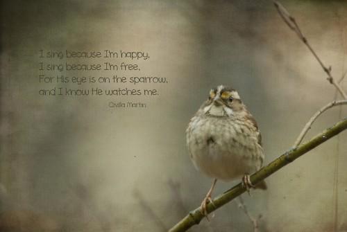sparrow-L
